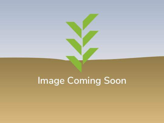 MERLO TURBO FARMER 42.7CS-145